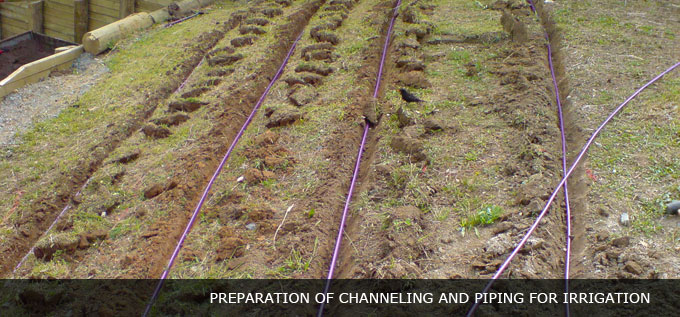 dripper line water irrigation